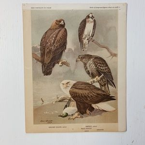 Vintage • Golden Eagle Bird Print